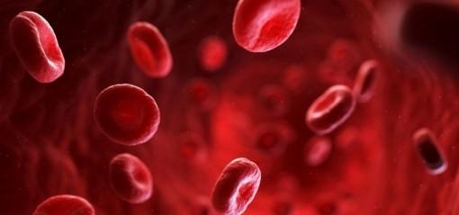 Một biến thể máu hiếm giúp ngăn ngừa bệnh sốt rét