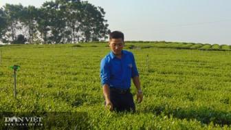 """Chán bôn ba xứ người, hotboy 9X tỉnh Thái Nguyên về trồng cây ra búp chát """"chế"""" ra thức uống có vị ngọt hậu"""