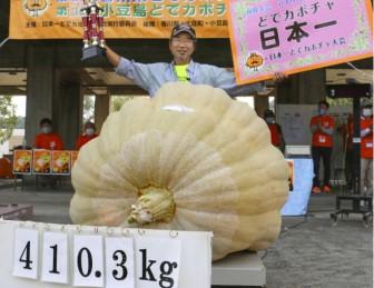 Nhật Bản: Bí ngô trồng trên nền nhac Mozart giành giải nhất cuộc thi bí ngô nặng nhất