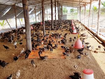 Tri Tôn nâng cao giá trị sản xuất nông nghiệp