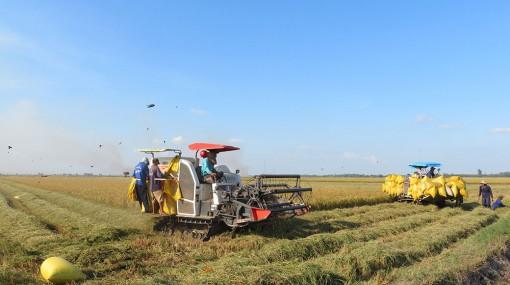 """Phú Tân phấn đấu hoàn thành nhiệm vụ """"Năm nông nghiệp"""""""
