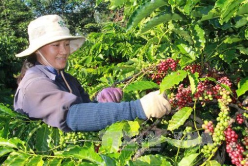 Nông dân Đắk Lắk kỳ vọng về nền nông nghiệp phát triển bền vững