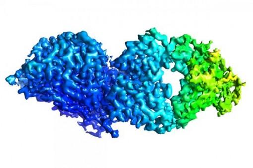 Xác định các kháng thể ngăn chặn nhiều chủng virus cúm B