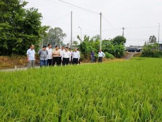 Bộ Nông nghiệp và Phát triển nông thôn thăm đồng ruộng An Giang