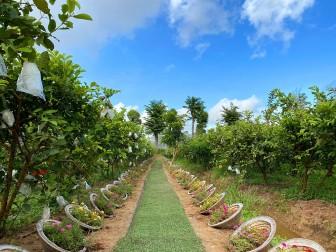 Cung đường nón lá tại nông trại Phan Nam
