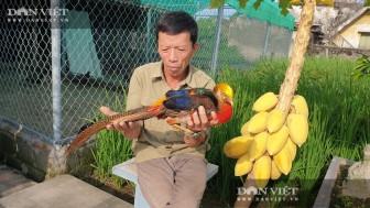 Nam Định: Nuôi đủ các loài chim quý hiếm, độc lạ, ông nông dân này chăm đã nhàn lại thu hàng trăm triệu đồng