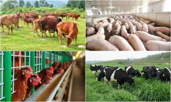 Thực hiện Chiến lược phát triển chăn nuôi: Lấy thị trường xuất khẩu làm động lực
