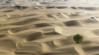 Bất ngờ với số lượng cây xanh trên sa mạc châu Phi
