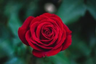 Những lời chúc ngày 20-10 ý nghĩa nhất dành tặng mẹ