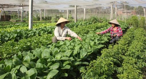 Bắc Giang: Trồng rau, hoa trong nhà lưới, công ty thu mua hết, nhiều nông dân thu tiền tỷ