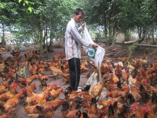 Thái Bình: Giúp nông dân sản xuất giỏi, làm giàu từ những cách này đây
