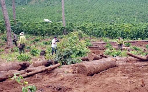 Phạt doanh nghiệp 251 triệu đồng về hành vi chuyển đổi đất rừng trái phép