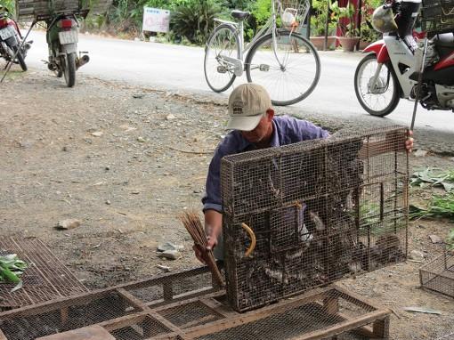"""Độc đáo những khu """"chợ"""" chuột"""
