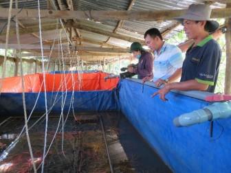 Hiệu quả từ mô hình nuôi lươn công nghệ cao