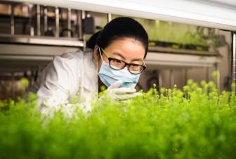 Medicago cung ứng 76 triệu liều vắcxin COVID-19 nguồn gốc thực vật