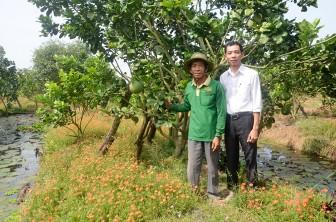 Phát triển kinh tế từ cây bưởi da xanh
