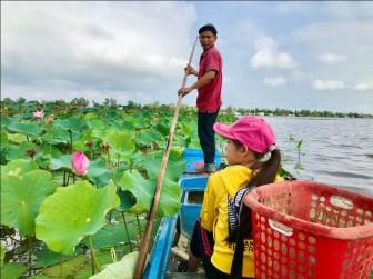 Thu nhập gần 80 triệu đồng/ha nhờ trồng sen trên đất lúa mùa nước nổi