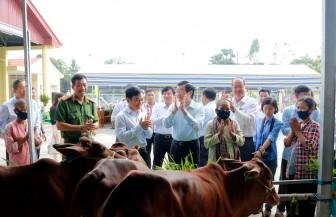 Trao 100 con bò giống cho hộ nghèo đồng bào dân tộc thiểu số Khmer huyện Tri Tôn