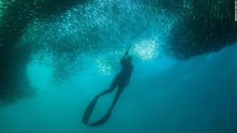 Khoảnh khắc ấn tượng về cuộc di cư khổng lồ trên biển ở Nam Phi