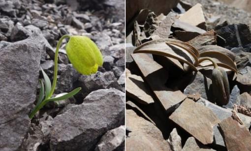 Phát hiện loài cây tiến hóa để tránh con người hái lượm
