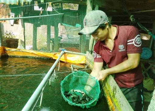 Nuôi cá chạch lấu ở xã Khánh Hòa