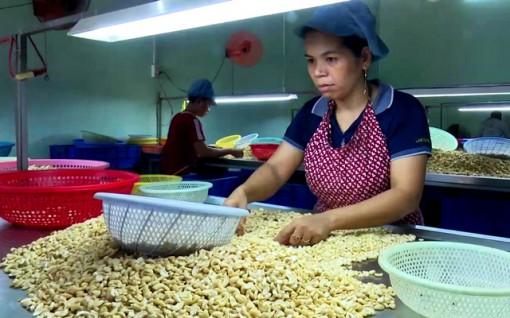 Thấy gì từ con số xuất khẩu hạt điều tăng 12,3% về lượng, nhưng giá giảm tới 13,3%?