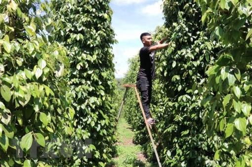 Nông sản Việt ra thị trường thế giới: Nâng cao năng lực thích ứng