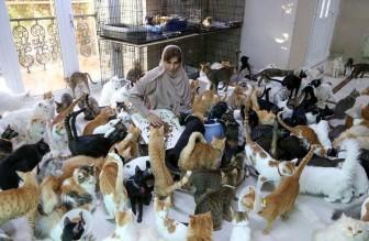 Người phụ nữ sống cùng gần 500 con mèo