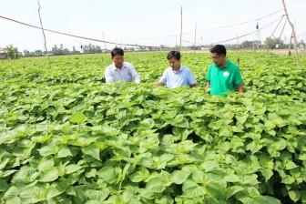 Chợ Mới đầu tư chuyển dịch cơ cấu nông nghiệp ứng dụng công nghệ cao