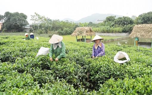 Mô hình kiểu mẫu xây dựng xã nông thôn mới tại Thái Nguyên