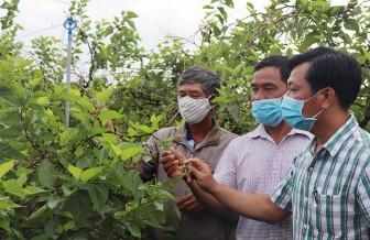 """Phú Tân tiếp nối thành quả """"Năm nông nghiệp"""""""