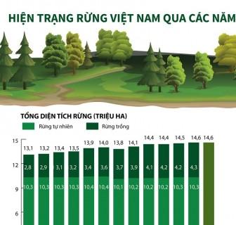 Hiện trạng rừng Việt Nam trong 13 năm qua