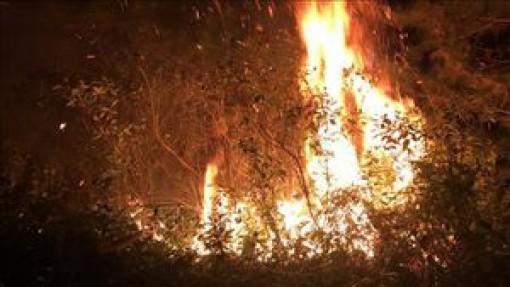 Liên tiếp xảy ra cháy cành cây khô, thảm thực vật ở đại lộ Thăng Long