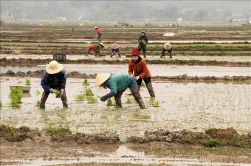 Hơn 21% diện tích gieo cấy vụ Đông Xuân 2020 - 2021 có nước