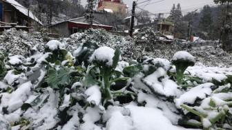 Hôm nay, Bắc Bộ rét đậm, vùng núi cao khả năng xảy ra mưa tuyết