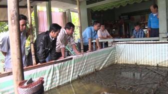 Hiệu quả mô hình nuôi lươn công nghệ cao