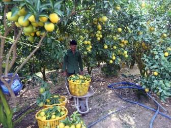 Nâng tầm trái cây Việt