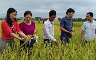 Phát huy nội lực trong xây dựng nông thôn mới ở Thái Nguyên