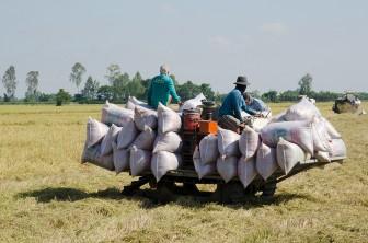 Đảm bảo công tác phòng, chống dịch bệnh trên cây trồng, vật nuôi