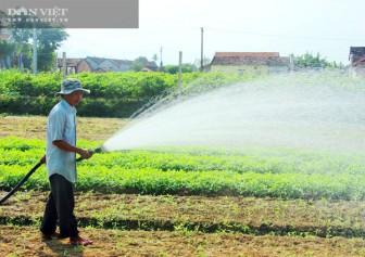 """Rau VietGAP """"bán chạy như tôm tươi"""", nông dân tỉnh Bình Định nhà nào trồng nhà đó trúng đậm"""