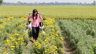 Chợ Mới tiếp tục chuyển dịch nông nghiệp theo hướng bền vững