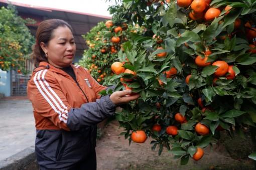 Nữ nông dân xứ vải thiều thu tiền tỷ từ... trồng cam