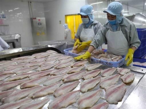 Xuất khẩu cá tra hồi phục: Nguồn cung chưa đáp ứng kịp thời