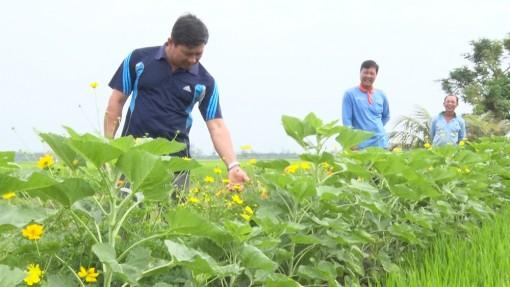 Phú Tân: Trồng hoa trên bờ ruộng góp phần hạn chế dịch bệnh