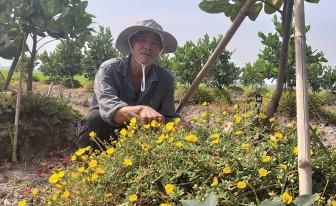 Ứng dụng công nghệ phun tưới tự động trên vườn mít Thái