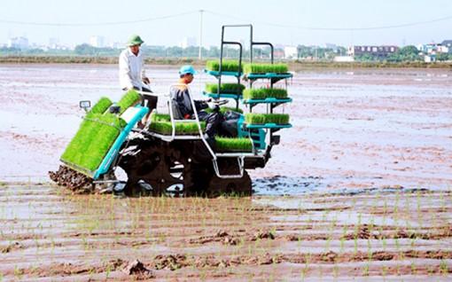 Triển khai dự án ứng dụng công nghệ cấy máy trong sản xuất lúa