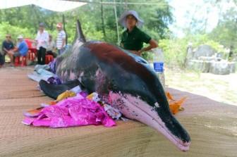 Xác cá voi nặng khoảng 1 tấn trôi dạt vào bờ biển Quảng Bình