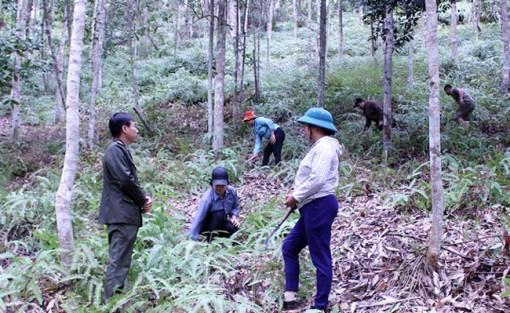 Giúp người dân gắn bó hơn với rừng