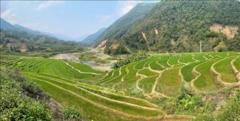 Quyến rũ ruộng bậc thang Mường Tè mùa mạ non