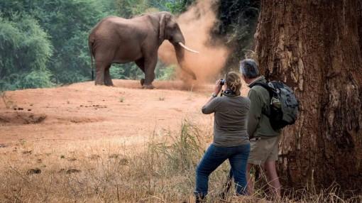 Báo động về số lượng loài voi châu Phi giảm mạnh